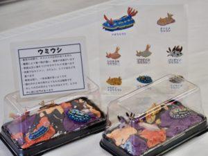 海の生きものジオラマ ウミウシ