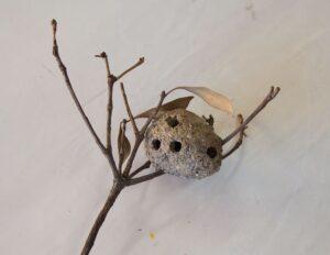 ドロバチの巣(羽化後)
